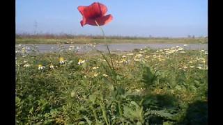 J.S. BACH, Bourrée -Suita lutniowa e-moll (BWV 996) - Jakob Lindberg. (A bit of spring in autumn :)