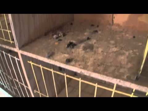 Analyzing the Droppings of Each Racing Pigeon Every Day.m4v