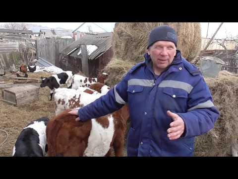 Инбридинг (родство) Крупного Рогатого Скота