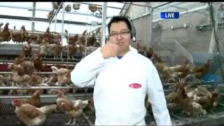 BT Vancouver: Egg Farming At Rabbit River Farms