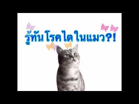 การเลี้ยงแมว:รู้ทันอาการโรคไตในแมว