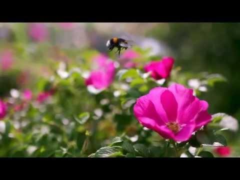 Дорога Цветов (Руслан Муратов - Дорога цветов)