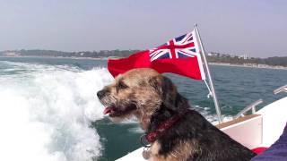 Border Terrier Tiggy Topaz Cruising Along Bournemouth Coast (part 1)