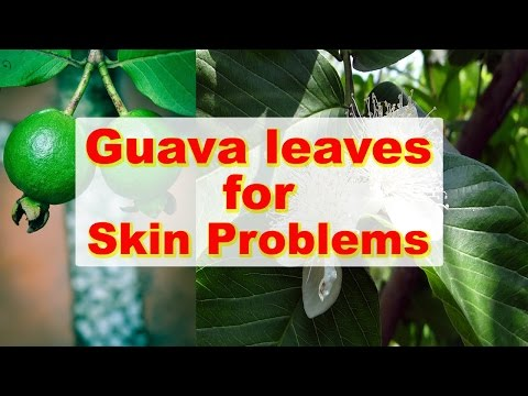 Guava Leaves for Dark Spots, Skin Allergies, Wrinkles and Acne