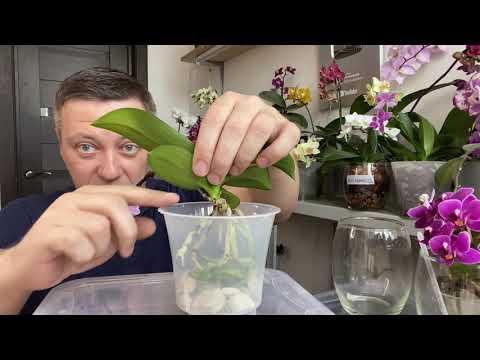 ПЕРЕСАДКА ОРХИДЕИ для редкого полива ЗАКРЫТАЯ СИСТЕМА пересадки орхидей в ПОЛУорганику