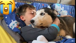 Stubborn Husky Argues With Dad! Then Refuses To Stop Cuddling!! [HUSKY SPEAKS!]