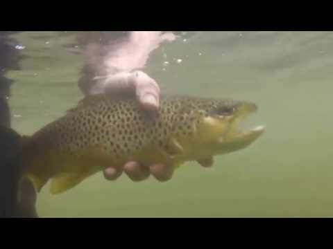 Pine Creek Fly Fishing