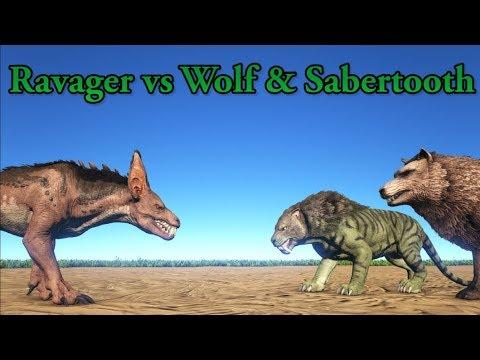 Ravager vs Direwolf, Sabertooth and Purlovia!  ARK Aberration  Cantex