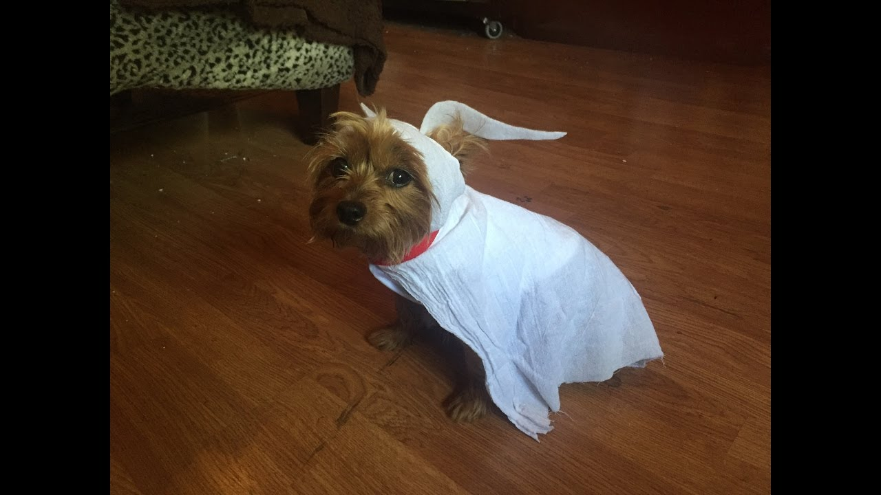 BOO-It-Yourself Day 15: Zero Dog Costume! - YouTube
