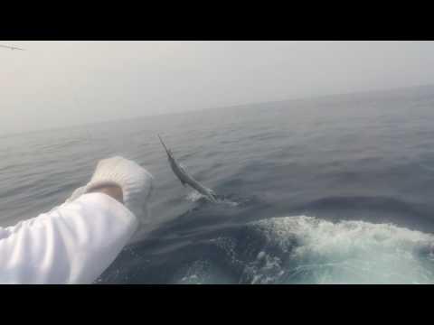2017 Offshore World Championship | Savannah Sport Fishing Club Bluewater | Pacific Sailfish