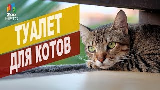 Туалет для кошек | Обзор туалета для кошек