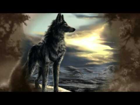 Волк - кофе мой друг