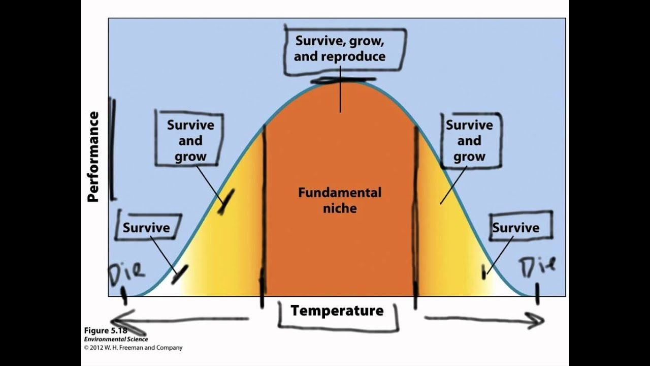 Image result for Fundamental Niche:
