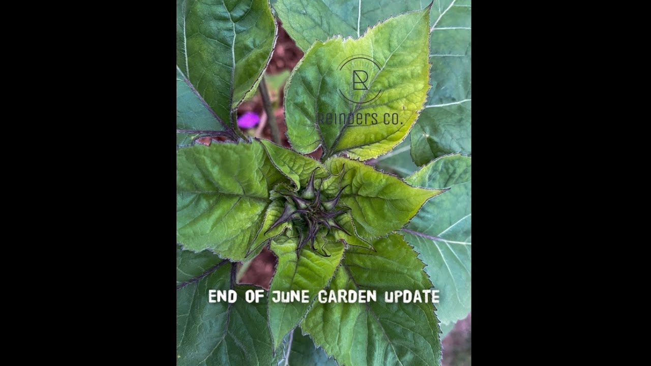 End of June garden projects update