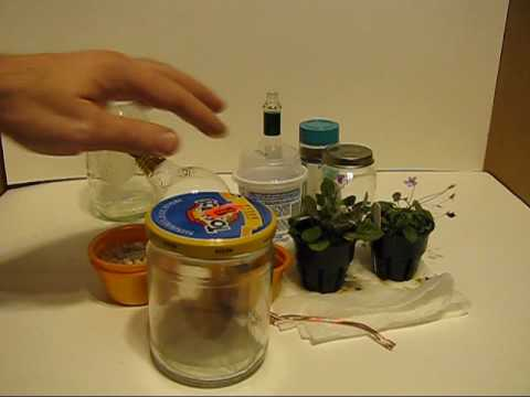 How To Make A Micro Terrarium Youtube