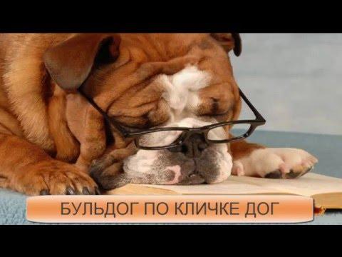 Бульдог по кличке дог мультфильм