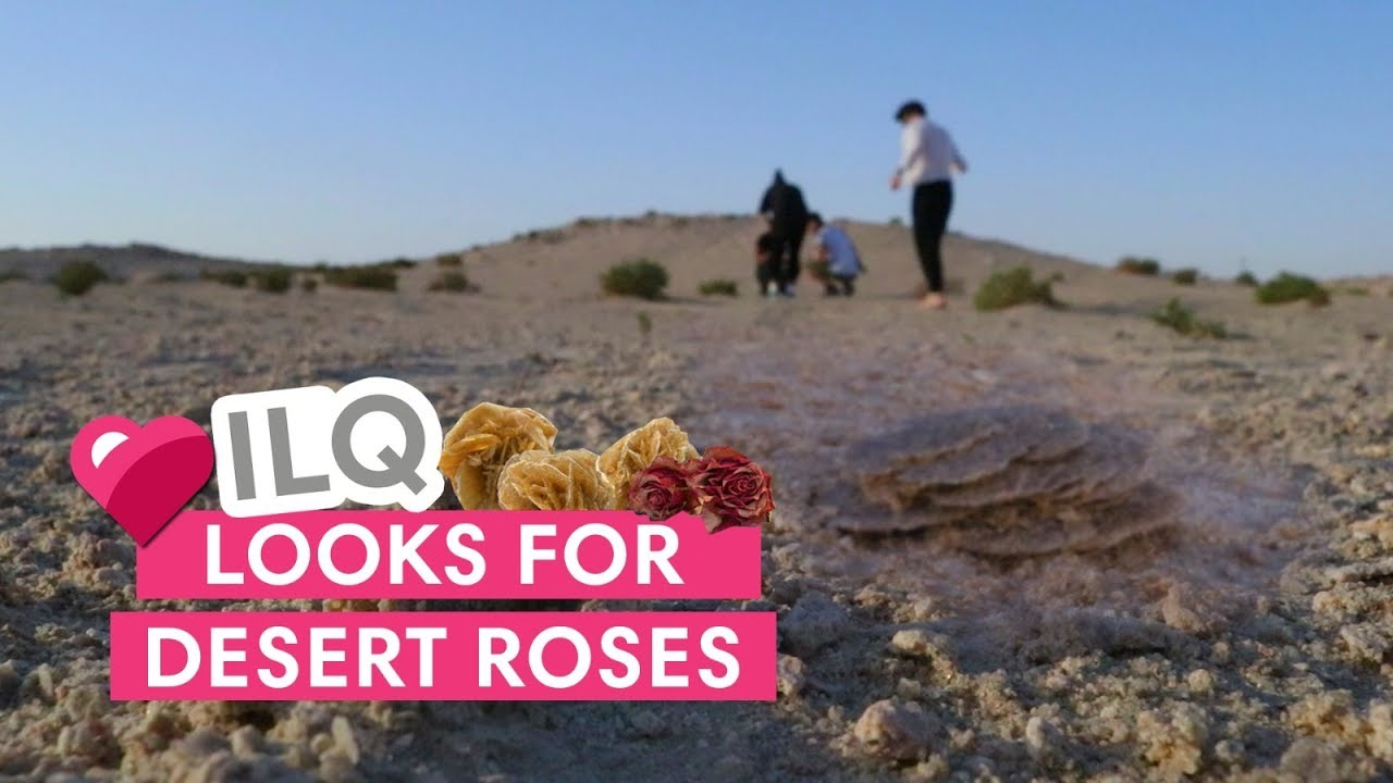 Have you ever seen a desert rose? We finally found them in Qatar!!!
