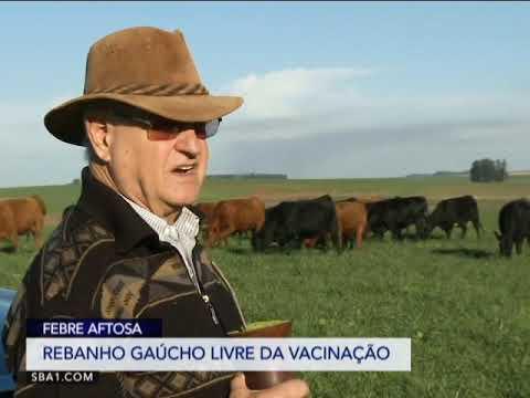 REBANHO GAÚCHO TORNA-SE LIVRE DA VACINAÇÃO CONTRA FEBRE AFTOSA.