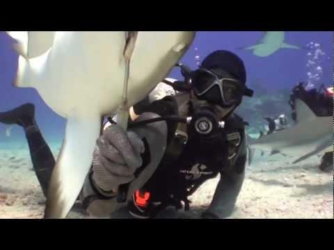 """""""Men in Grey Suits"""" Hand Feeding Sharks in St. Maarten with Ocean Explorers."""