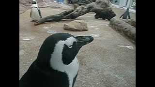 水族館で撮った動画です。