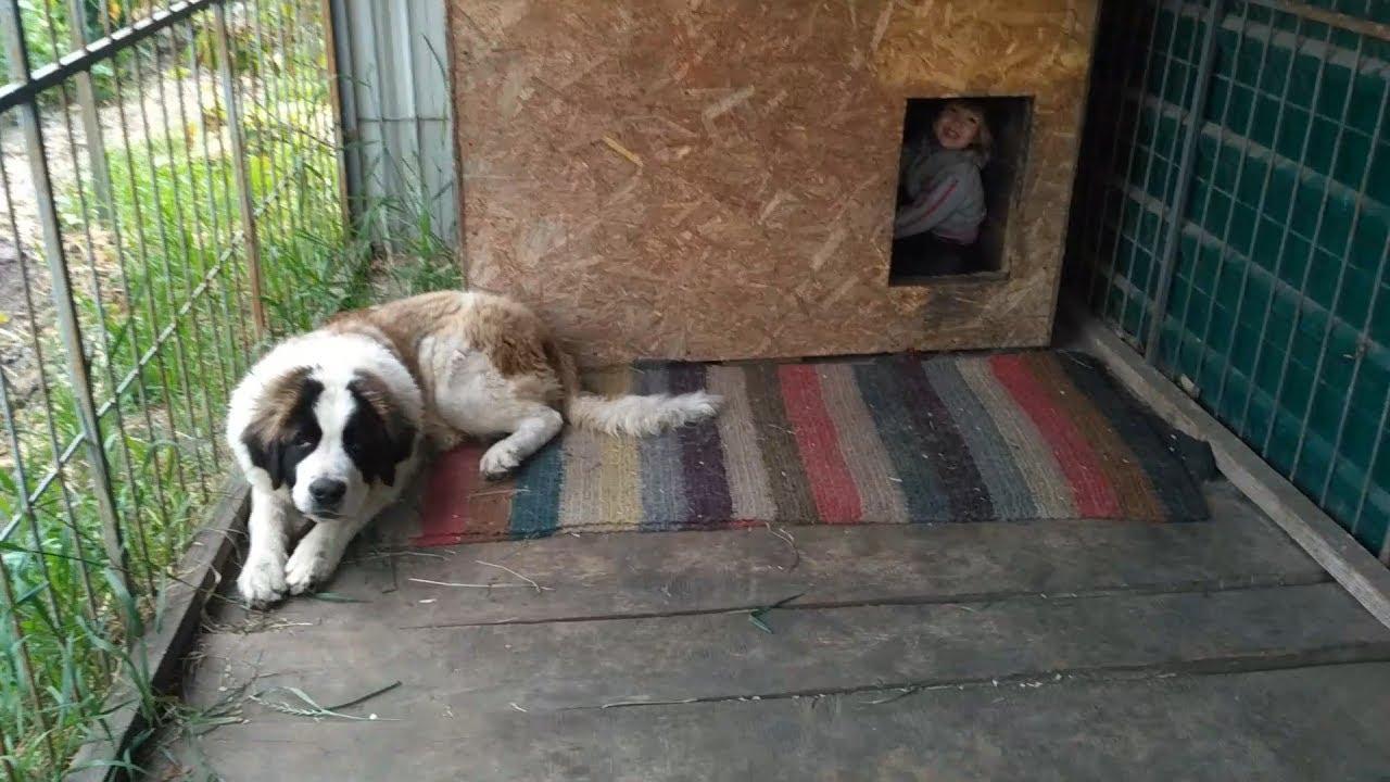 Собака нервно ест траву, девочка в собачьей будке ...