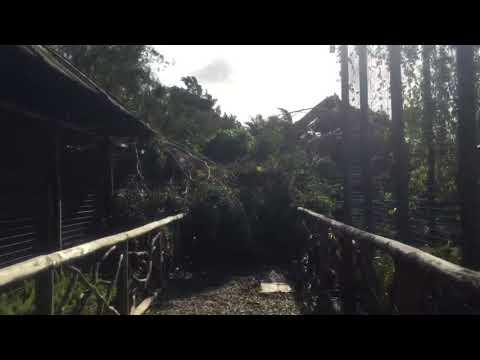 ZWF Miami Hurricane Irma Relief Fund