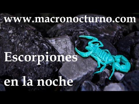 cómo-se-ven-los-escorpiones-por-la-noche...-(ver-en-hd)