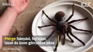 ragadozó pókok és paraziták