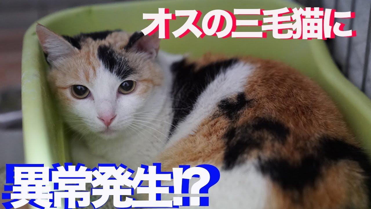 三 毛 猫 オス 値段