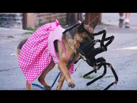 Giant Spider Scaring Dogs (Situation X - S2 E1)