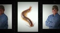 Termite and Pest Control in Phoenix, AZ   (602) 757-8252