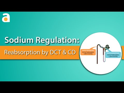 Sodium Regulation: Distal Convoluted Tubule and Collecting Duct