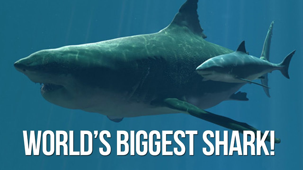 Biggest Shark In The World