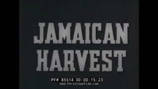 1940s EDUCATIONAL FILM BANANA PRODUCTION IN JAMAICA  85514