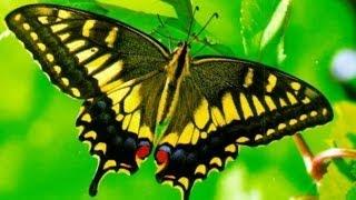 Учимся рисовать бабочку поэтапно. Рисованное видео.(http://myvideonazakaz.ru/moi-uslugi Здесь можно заказать рисованное видео для вашего проекта. Рисованное видео. Учимся..., 2014-06-04T17:37:50.000Z)