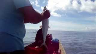 Pesca da sarda em Mucuri