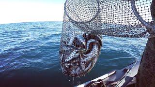 1 января 2021 года на Морской рыбалке в Чёрном море Sea fishing in the Black Sea
