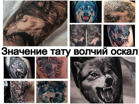 Значение тату волчий оскал   информация и фото для сайта Tattoo-photo.ru