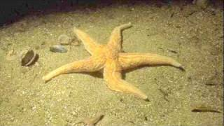 Starfish and Coffee (Lady GayGay Remix)