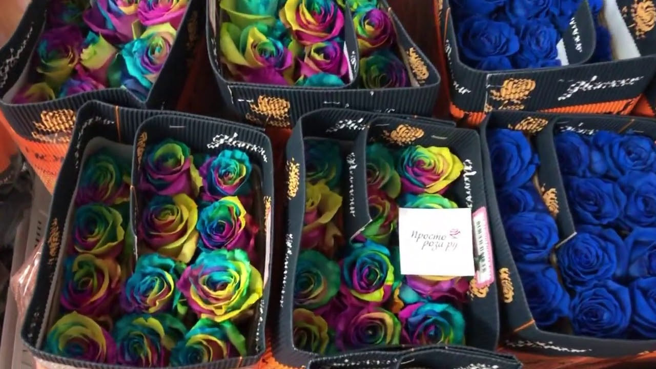 75 радужных роз LUXURY