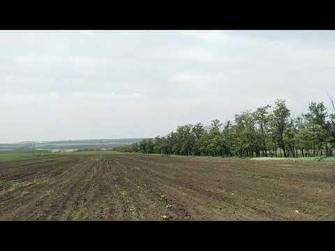 Арбуз суходол.Всходы арбуза Мариуполь.Выращивание арбуза
