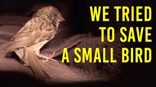 Wildlife Rescue of Injured Bird - We Find While in Nature & Learn How to Care For an Injured Bird