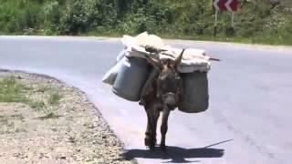 Armenia особенный  Ослик из Гориса(Самое интересное о нас тут http://erevanlive.wordpress.com/ Этот ослик нагруженный товаром ,регулярно самостоятельно..., 2013-06-16T15:35:00.000Z)