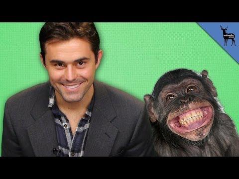 Chimpanzees Choose Their Friends!