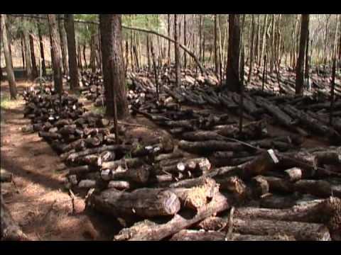 Shiitake Mushroom Farming Youtube