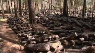 Shiitake mushroom farming