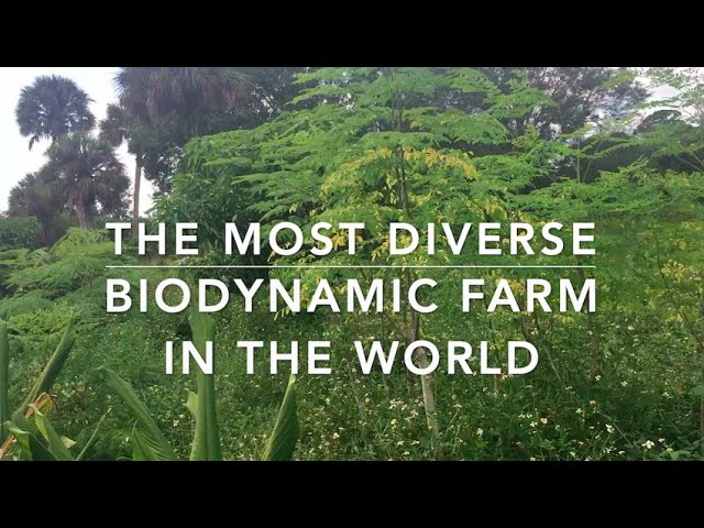 Most diverse certified biodynamic, organic farm in the world!  Frog Valley Farm in South Florida