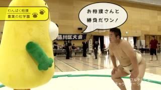 シナガワン わんぱく相撲編①