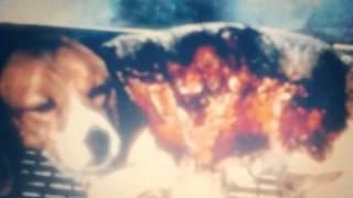 Убили собаку ангел