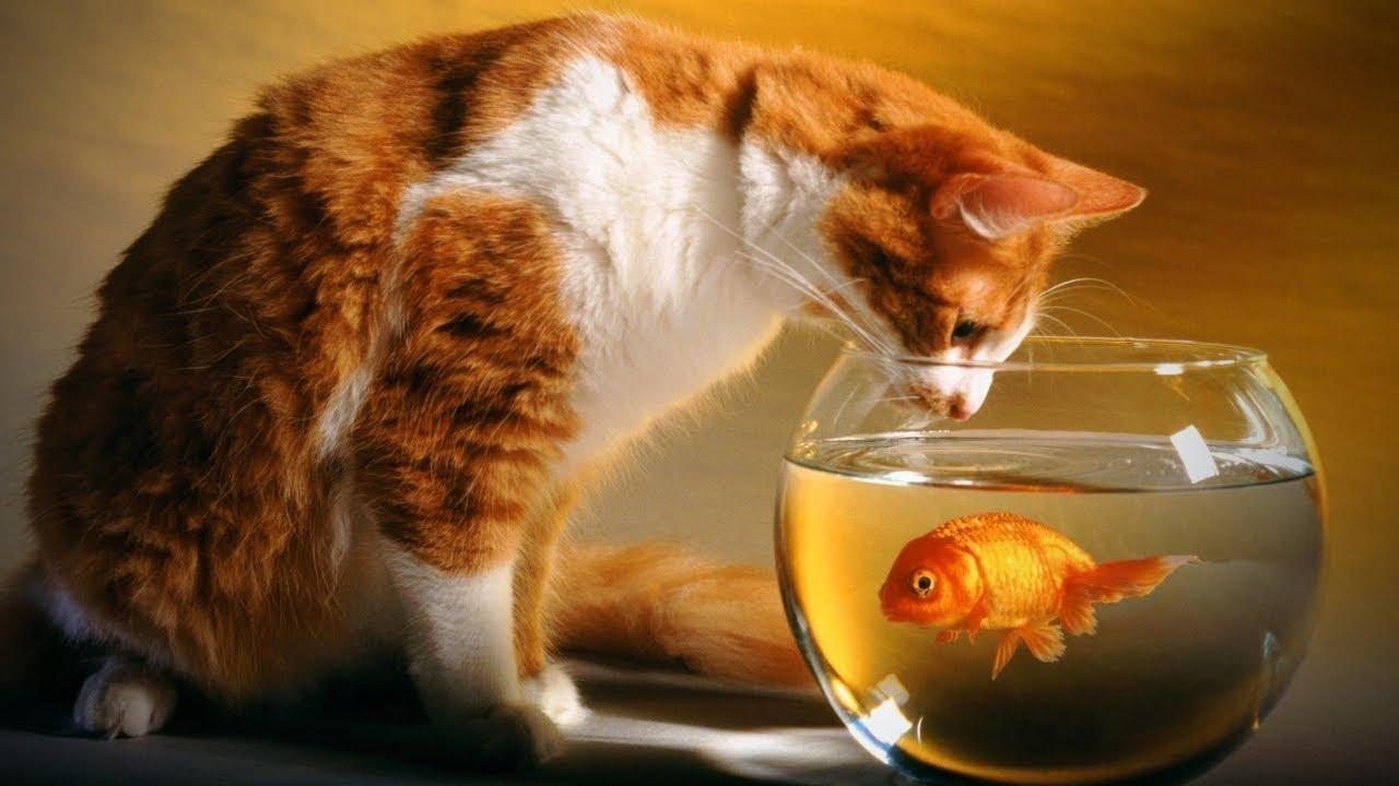 Cats and Fish 🐱🐠 Cute Cats Plays with Fish (Part 1) [Epic Life] - YouTube